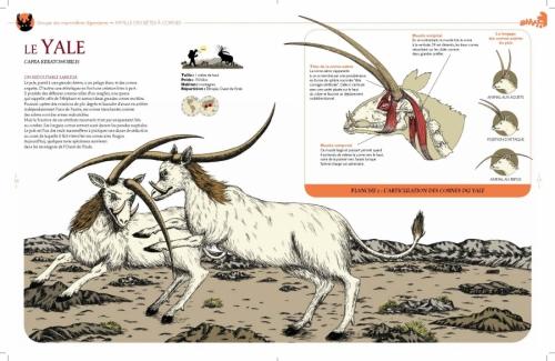 histoire naturelle 1.jpg